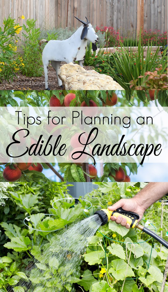 Tips-for-Planning-an-Edible-Landscape1